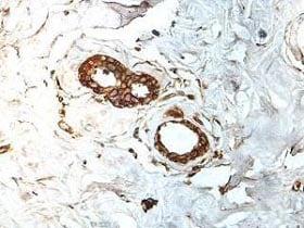 Immunohistochemistry (Formalin/PFA-fixed paraffin-embedded sections) - Anti-ATMIN antibody (ab176894)
