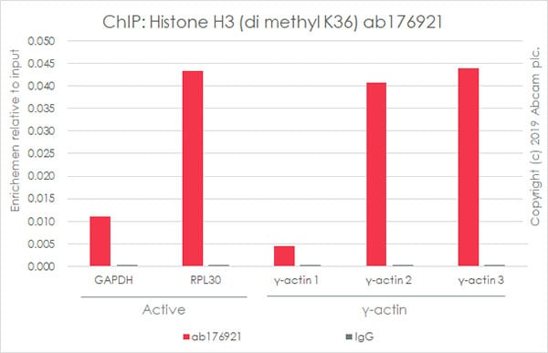 ChIP - Anti-Histone H3 (di methyl K36) antibody [EPR16994(2)] - ChIP Grade (ab176921)