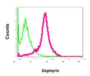 Flow Cytometry - Anti-Gephyrin antibody [EPR12651(B)] (ab177154)
