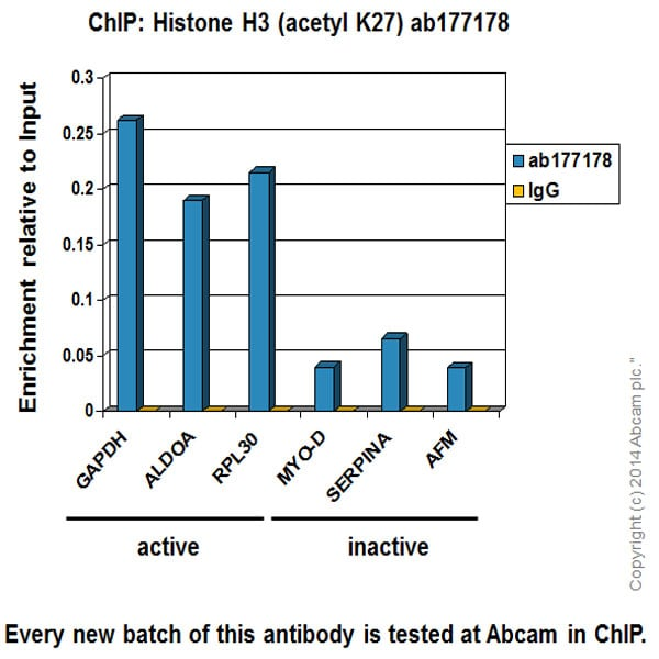 ChIP - Anti-Histone H3 (acetyl K27) antibody [EP16602] - ChIP Grade (ab177178)