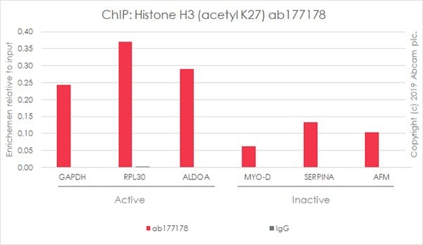 ChIP - Anti-Histone H3 (acetyl K27) antibody [EP16602] - ChIP Grade (ab177178)