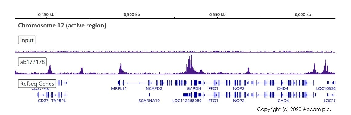 ChIP-sequencing - Anti-Histone H3 (acetyl K27) antibody [EP16602] - ChIP Grade (ab177178)