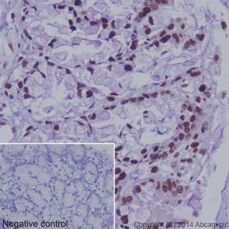 Immunohistochemistry (Formalin/PFA-fixed paraffin-embedded sections) - Anti-Histone H3 (acetyl K36) antibody [EPR16992] (ab177179)