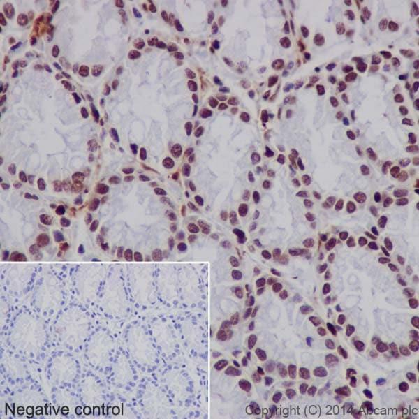 Immunohistochemistry (Formalin/PFA-fixed paraffin-embedded sections) - Anti-Histone H3 (mono+di+tri methyl K79) antibody [EPR17468] - ChIP Grade (ab177185)