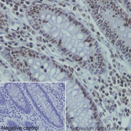 Immunohistochemistry (Formalin/PFA-fixed paraffin-embedded sections) - Anti-Histone H4 (mono methyl K20) antibody [EPR16999] - ChIP Grade (ab177188)