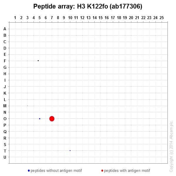 Peptide Array - Anti-Histone H3 (formyl K122) antibody [EPR17896] (ab177306)