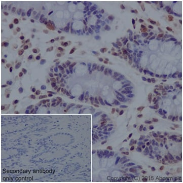 Immunohistochemistry (Formalin/PFA-fixed paraffin-embedded sections) - Anti-Histone H2A antibody [EPR17470] - ChIP Grade (ab177308)