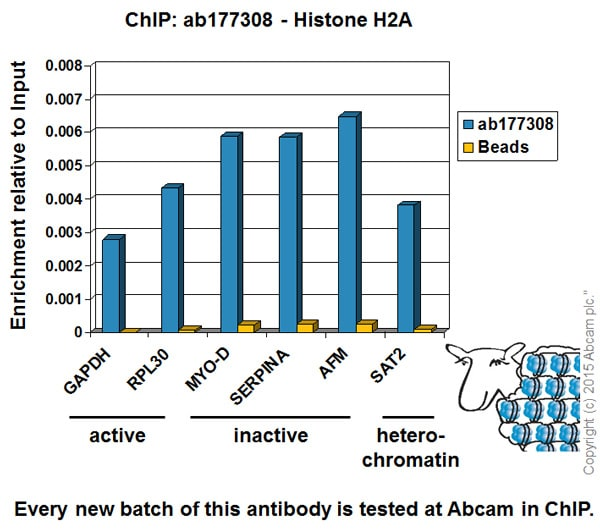 ChIP - Anti-Histone H2A antibody [EPR17470] - ChIP Grade (ab177308)