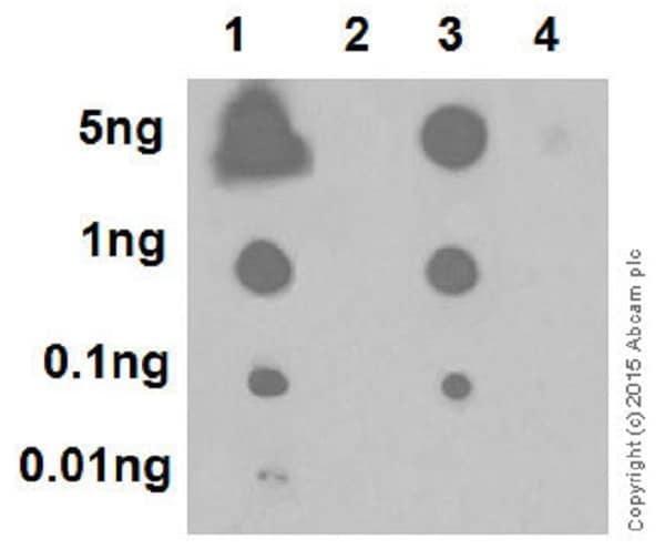 Dot Blot - Anti-Histone H2A (phospho S1) + Histone H4 (phospho S1) antibody [EPR18184] (ab177309)
