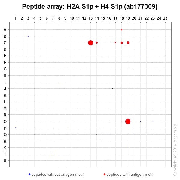 Peptide Array - Anti-Histone H2A (phospho S1) + Histone H4 (phospho S1) antibody [EPR18184] (ab177309)