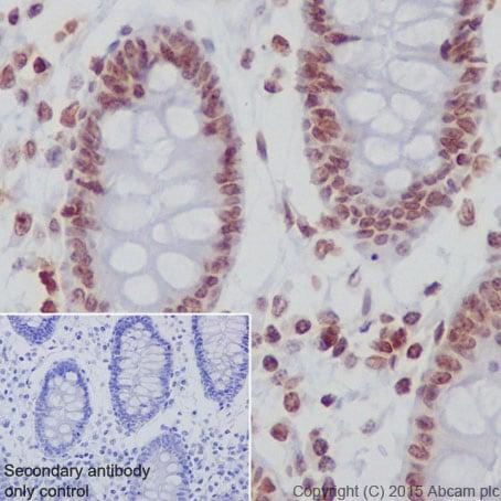 Immunohistochemistry (Formalin/PFA-fixed paraffin-embedded sections) - Anti-Histone H2A (hydroxyl Y39) antibody [EPR17683] (ab177377)