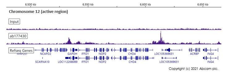 ChIP-sequencing - Anti-Histone H2B (acetyl K20) antibody [EPR859] - ChIP Grade (ab177430)