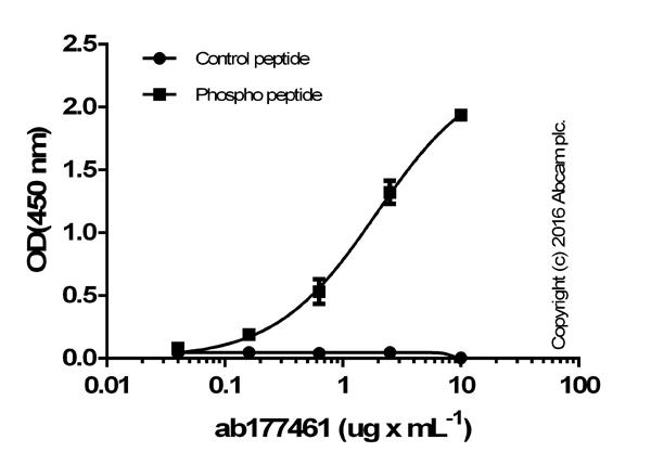 ELISA - Anti-Pyruvate Dehydrogenase E1-alpha subunit (phospho S293) antibody [EPR12200] (ab177461)