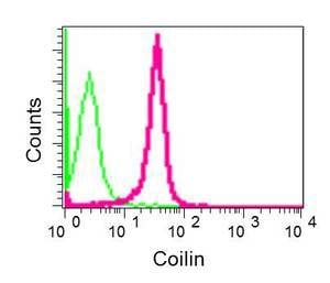 Flow Cytometry - Anti-Coilin antibody [EPR7843(N)] - N-terminal (ab177466)