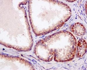 Immunohistochemistry (Formalin/PFA-fixed paraffin-embedded sections) - Anti-UBA5 antibody [EPR11729] (ab177478)