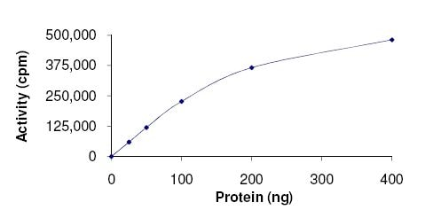 Functional Studies - Recombinant human IKK beta protein (Active) (ab177584)