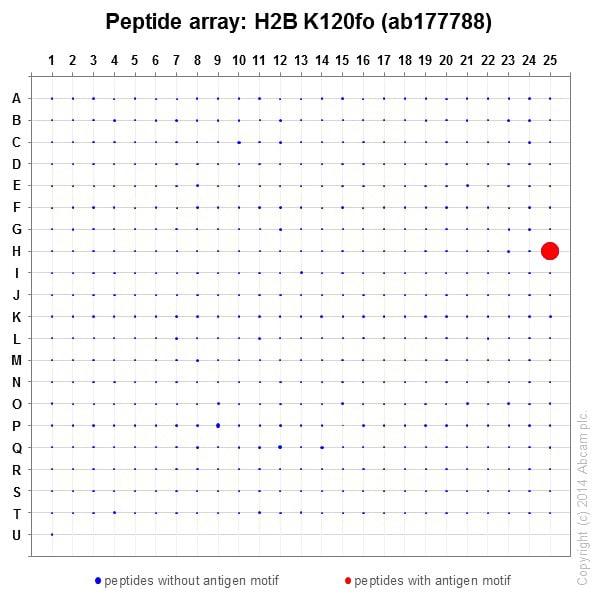 Peptide Array - Anti-Histone H2B (formyl K120) antibody [EPR17701] (ab177788)