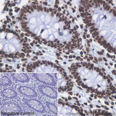 Immunohistochemistry (Formalin/PFA-fixed paraffin-embedded sections) - Anti-Histone H4 (acetyl K5 + K8 + K12 + K16) antibody [EPR16606] (ab177790)