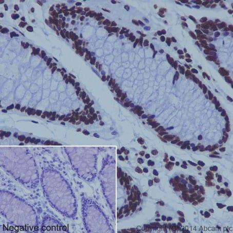 Immunohistochemistry (Formalin/PFA-fixed paraffin-embedded sections) - Anti-Histone H4 antibody [EPR16599] - ChIP Grade (ab177840)