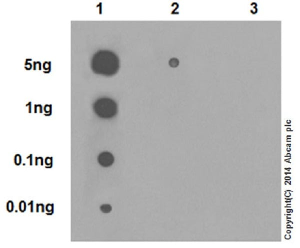 Dot Blot - Anti-Histone H4 (crotonyl K5) antibody [EPR17903] (ab177844)