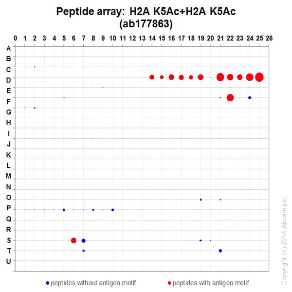 Peptide Array - Anti-Histone H2A.X (acetyl K5) + Histone H2A (acetyl K5) antibody [EPR17589] - ChIP Grade (ab177863)