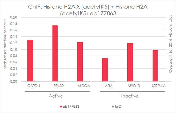 ChIP - Anti-Histone H2A.X (acetyl K5) + Histone H2A (acetyl K5) antibody [EPR17589] - ChIP Grade (ab177863)