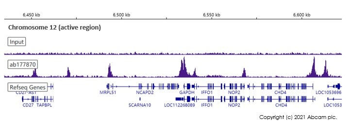 ChIP-sequencing - Anti-Histone H3 (acetyl K18) antibody [EPR16595] - ChIP Grade (ab177870)