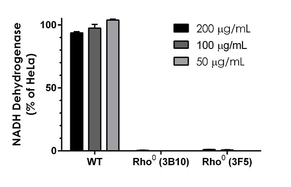 Quantification of NADH Dehydrogenase expression in 143B wildtype (WT) and two clones (3B10 and 3F5) of 143B-derived Rho0 (mitochondrial DNA-depleted) cells.