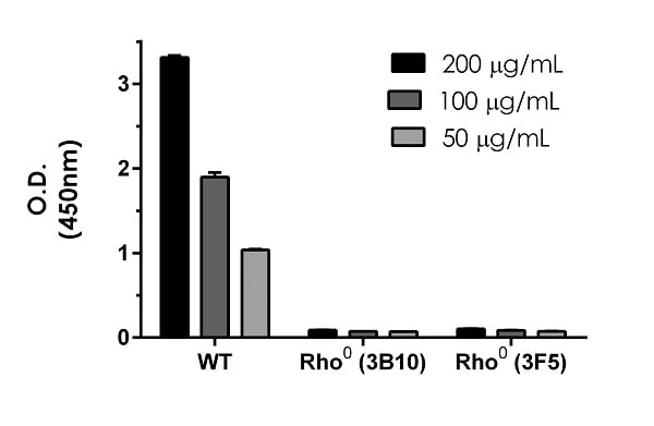 Comparison of NADH Dehydrogenase expression in 143B wildtype (WT) and two clones (3B10 and 3F5) of 143B-derived Rho0 (mitochondrial DNA-depleted) cells.