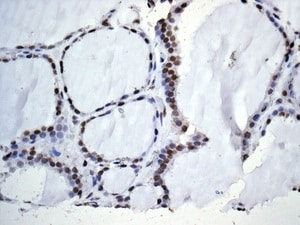 Immunohistochemistry (Formalin/PFA-fixed paraffin-embedded sections) - Anti-WDR5 antibody [EPR11350] - C-terminal (ab178410)