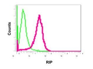 Flow Cytometry - Anti-RIP antibody [EPR4689-100] (ab178420)