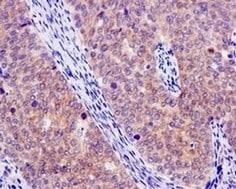 Immunohistochemistry (Formalin/PFA-fixed paraffin-embedded sections) - Anti-Artemin antibody [EPR9763] (ab178434)
