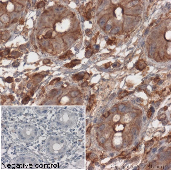 Immunohistochemistry (Formalin/PFA-fixed paraffin-embedded sections) - Anti-beta Actin antibody [mAbcam 8224] - BSA and Azide free (ab178787)