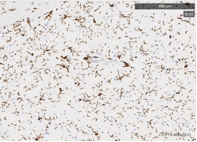 Immunohistochemistry (Formalin/PFA-fixed paraffin-embedded sections) - Anti-Iba1 antibody [EPR16588] (ab178846)