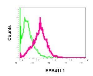 Flow Cytometry - Anti-EPB41L1 antibody [EPR11090] (ab179453)