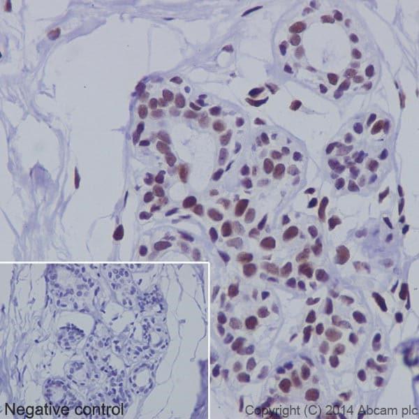 Immunohistochemistry (Formalin/PFA-fixed paraffin-embedded sections) - Anti-PML Protein antibody [EPR16792] (ab179466)