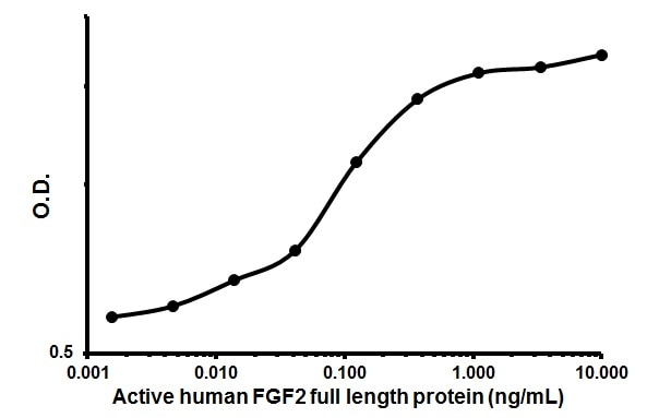 Cellular activation - Recombinant human FGF2 protein (Animal Free) (ab179489)