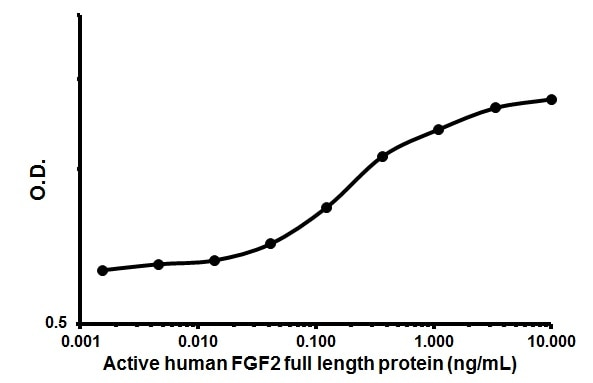 Cellular activation - Recombinant human FGF2 protein (Animal Free) (ab179490)