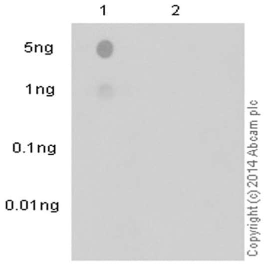 Dot Blot - Anti-Phosphotyrosine antibody [EPR16871] (ab179530)