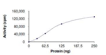 Functional Studies - Recombinant human c-Kit (mutated V559D) protein (ab179622)