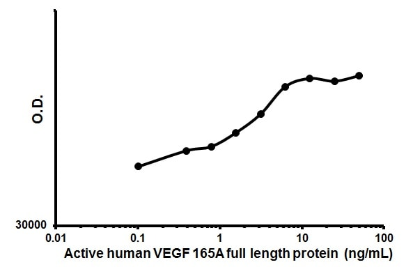 Cellular activation - Recombinant human VEGF 165A protein (Animal Free) (ab179624)