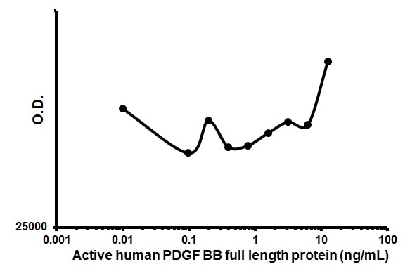 Cellular activation - Recombinant human PDGF BB protein (Animal Free) (ab179626)