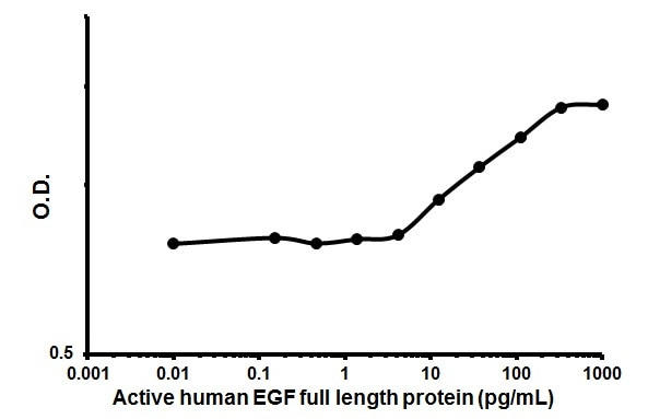 Cellular activation - Recombinant human EGF protein (Animal Free) (ab179628)