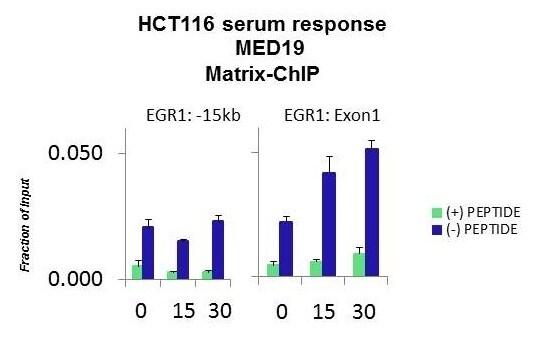ChIP - Anti-MED19 antibody (ab179735)