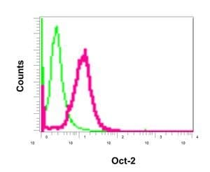 Immunoprecipitation - Anti-Oct-2 antibody [EPR12482] (ab179808)