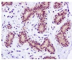 Immunohistochemistry (Formalin/PFA-fixed paraffin-embedded sections) - Anti-DNAJC7 antibody [EPR13349] - N-terminal (ab179830)