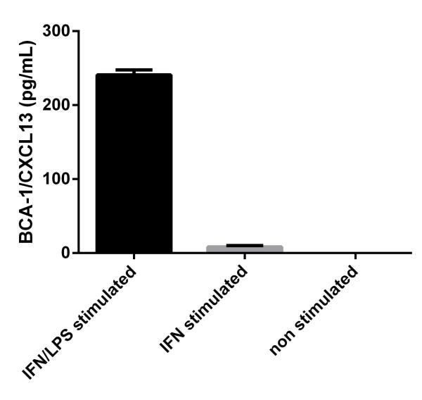 BCA-1 (CXCL13) signal on stimulated and non stimulated media supernatants from THP-1 cells.
