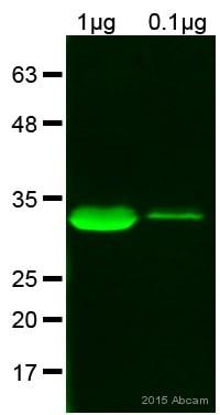 Western blot - Anti-6X His tag® antibody [HIS.H8] (ab18184)