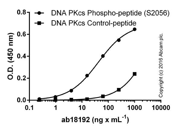 ELISA - Anti-DNA PKcs (phospho S2056) antibody (ab18192)