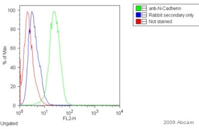 Flow Cytometry - Anti-N Cadherin antibody - Intercellular Junction Marker (ab18203)